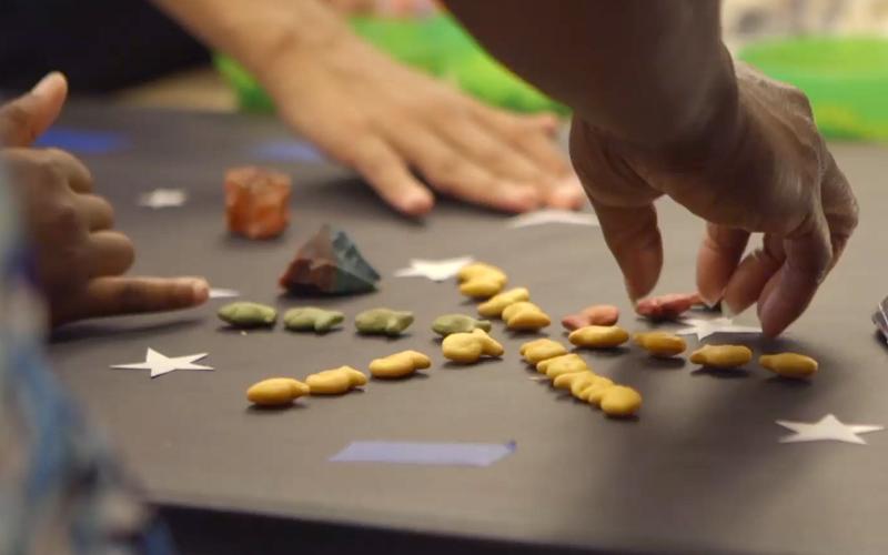 Goldfish Animation Experience